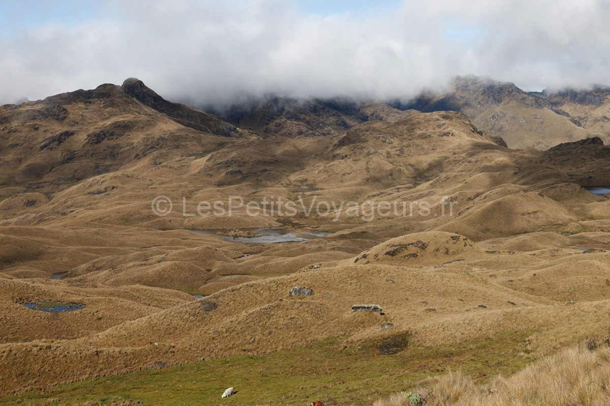 De la steppe à la jungle à El Cajas – Equateur